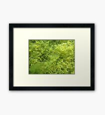 Underwater Vegetation 514 Framed Print