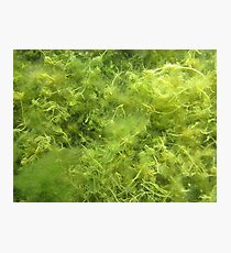 Underwater Vegetation 514 Photographic Print