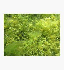 Underwater Vegetation 514 Photographic Print