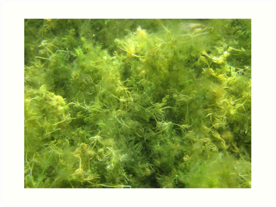 Underwater Vegetation 515 by Thomas Murphy