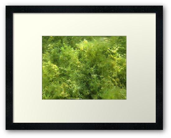 Underwater Vegetation 515 by Thomas Murphy