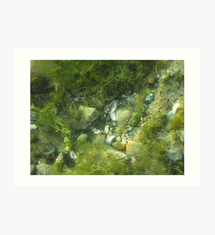 Underwater Vegetation 520 Art Print
