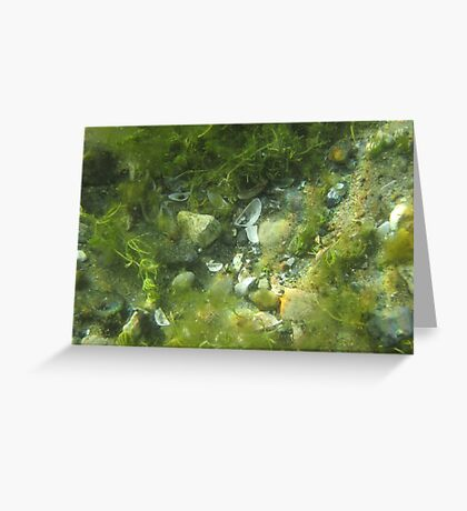 Underwater Vegetation 520 Greeting Card