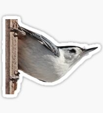 White-breasted nuthatch Sticker