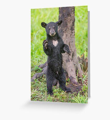 Hello Bear Greeting Card
