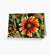 Honeybee on a Common Madia Flower Greeting Card