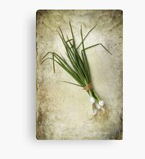 Spring Onions Canvas Print