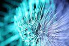 fireworks 14/11/15 by david gilliver