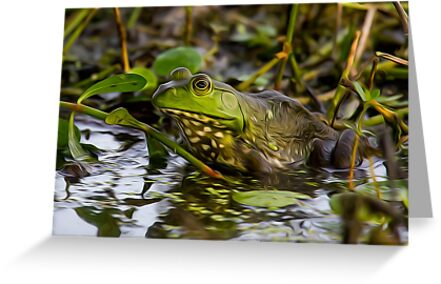 Female Bullfrog Oil by Paul Wolf