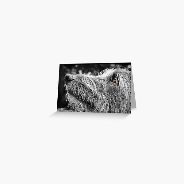 Shaggy Lurcher Greeting Card