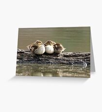 Ducklings on a Log Greeting Card