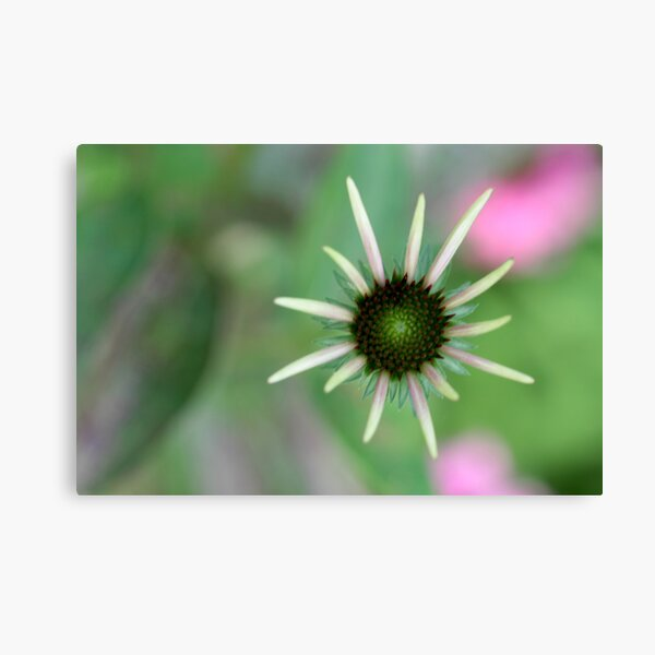 bloom out of the blur Canvas Print
