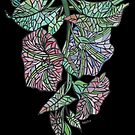 Art Nouveau Morning Glory Isolated On Black by taiche