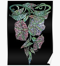Art Nouveau Morning Glory Isolated On Black Poster