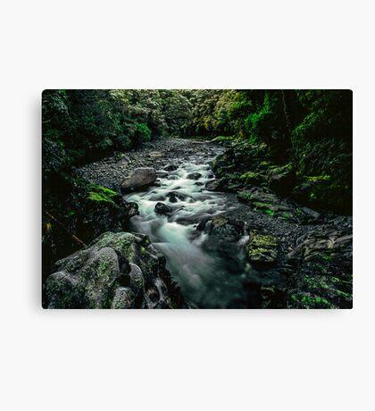 Fiordland National Park Canvas Print