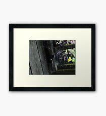 Web! Framed Print