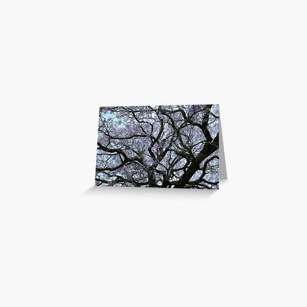 Flowering Jacaranda Tree Greeting Card