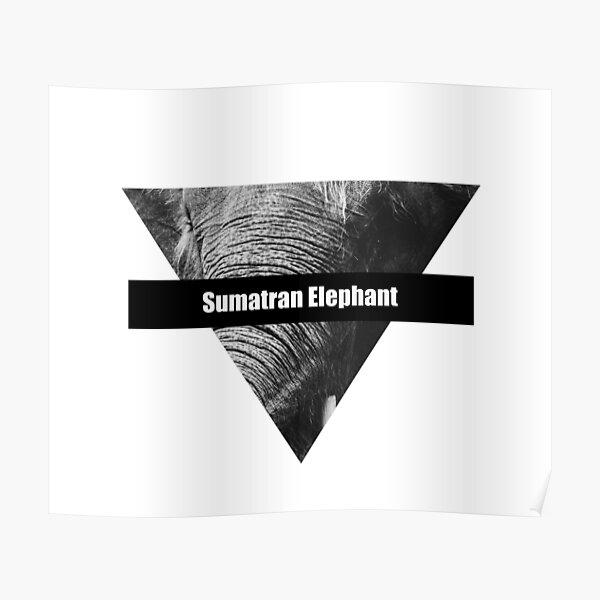 Sumatran Elephant Poster