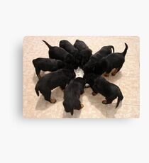 Nine Rottweiler Puppies Eating From One Food Bowl Canvas Print