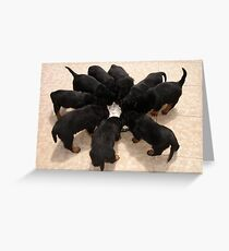 Nine Rottweiler Puppies Eating From One Food Bowl Greeting Card