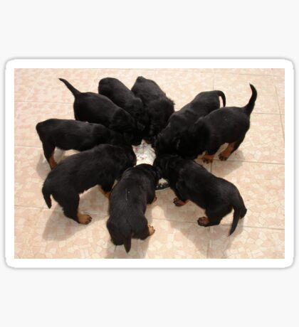 Nine Rottweiler Puppies Eating From One Food Bowl Sticker