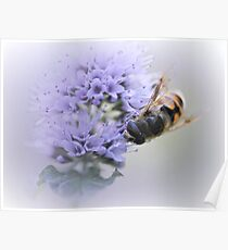 Striped buzz......... Poster