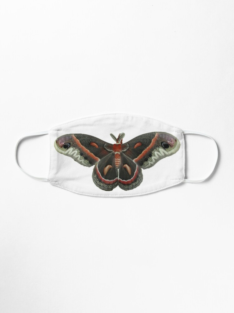 Alternate view of Cecropia Moth Mask