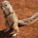 Squirrel by gogston