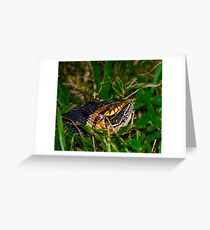 Broad-banded Water Snake and Breakfast Greeting Card