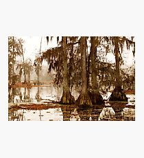 Misty Morning in the Swamp Photographic Print