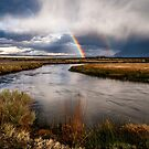 Upper Owens Rainbows by Cat Connor