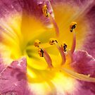 Lily, oh Lily. by Lee d'Entremont