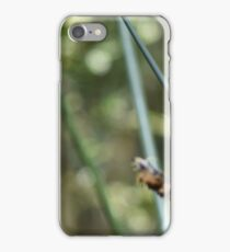 Frog on a reed iPhone Case/Skin