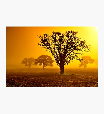 """In The Mists Of Dawn"" Photographic Print"