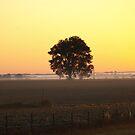 Lemonade Sunrise by Scott Hendricks