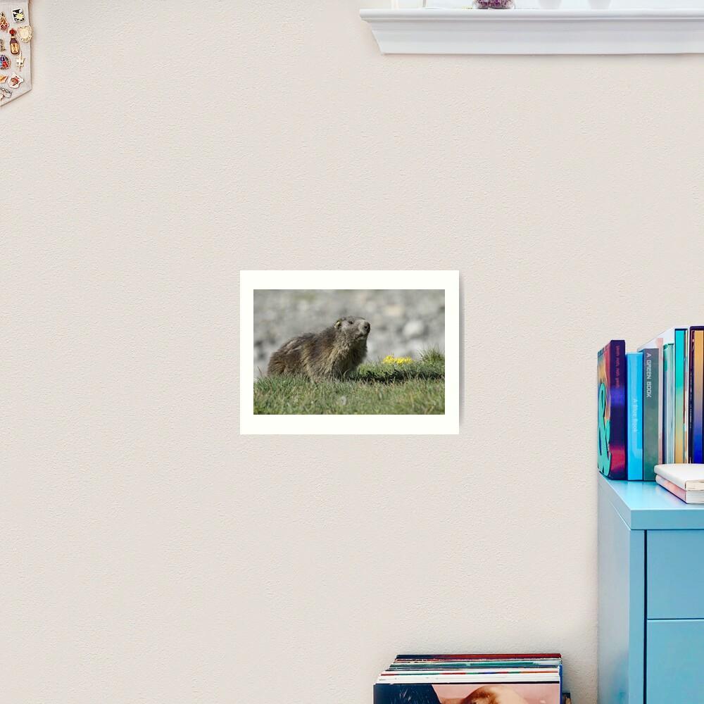 Boss of the marmots Art Print