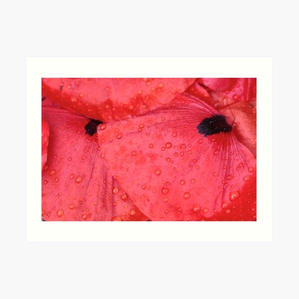 dropped petals Art Print