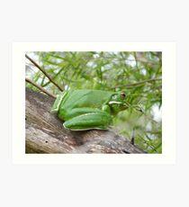 a very large white lipped green tree frog Kunstdruck