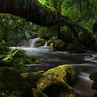 Spring flood by Donovan Wilson