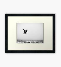Soaring Nova Scotia Gull Framed Print