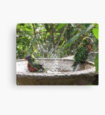 bird bath Canvas Print