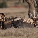Vulture display by David Clarke