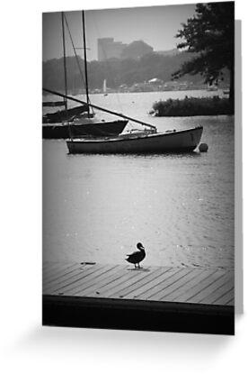 Duck on the Dock by Amanda Vontobel Photography/Random Fandom Stuff