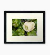 Albino Bullnose Pepper  Framed Print
