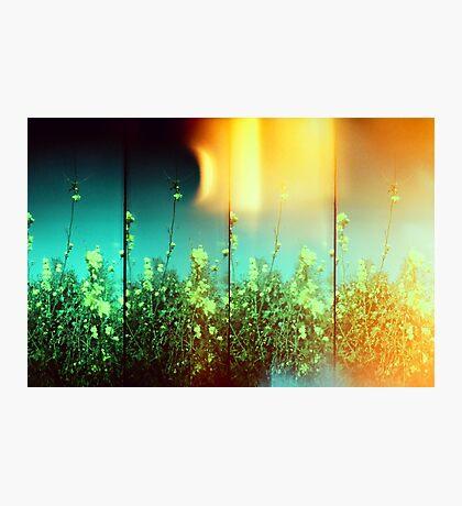 Magic Days Photographic Print