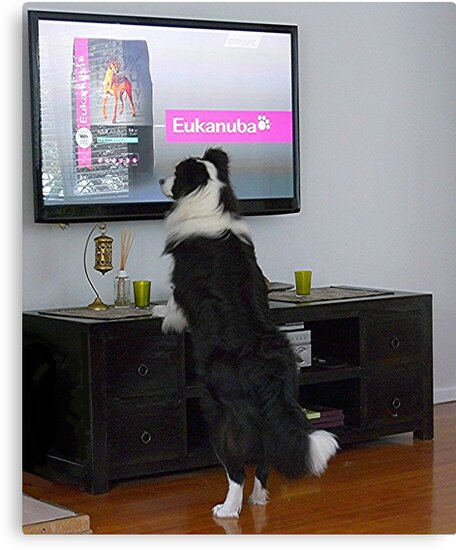 Clever dog  'Ollie'.........................! by Roy  Massicks