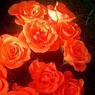 Roses by Pauli Hyvönen
