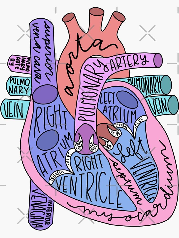 Corazón anatómico de jaquemv
