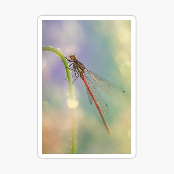 Magical Red damselfly Sticker