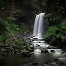 Falls in the Otways by Melissa Dickson